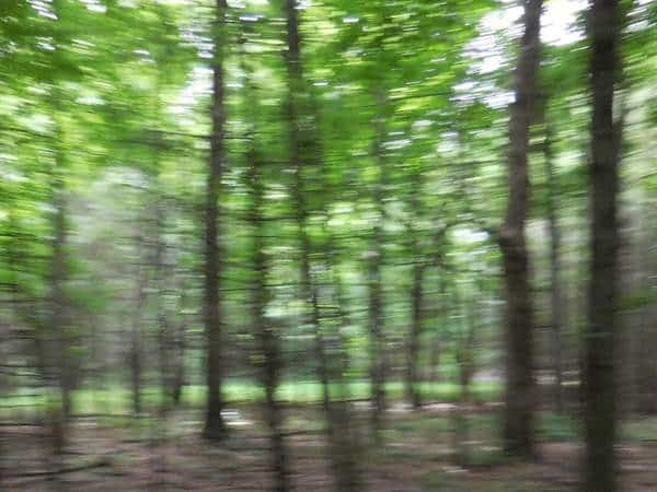 Inspiration for Abstract Forest Painting   Holly Van Hart   son   Forests Trees   New York   Photo