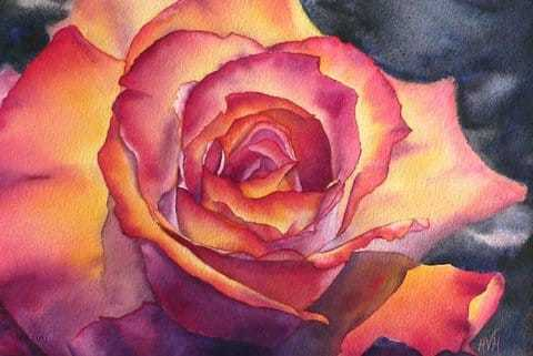 Saratoga Rose, Watercolor painting by Holly Van Hart